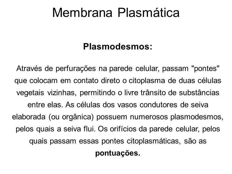 Membrana Plasmática Plasmodesmos: