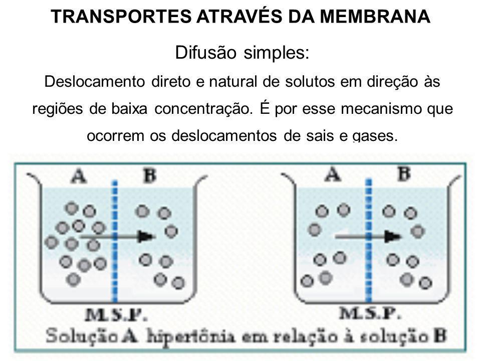 TRANSPORTES ATRAVÉS DA MEMBRANA