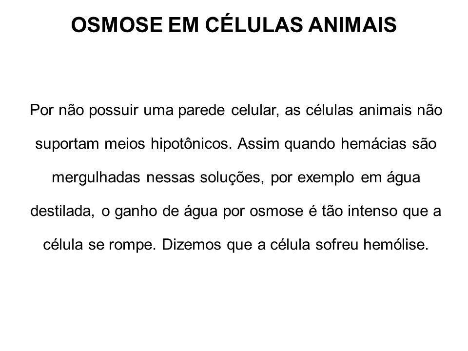 OSMOSE EM CÉLULAS ANIMAIS