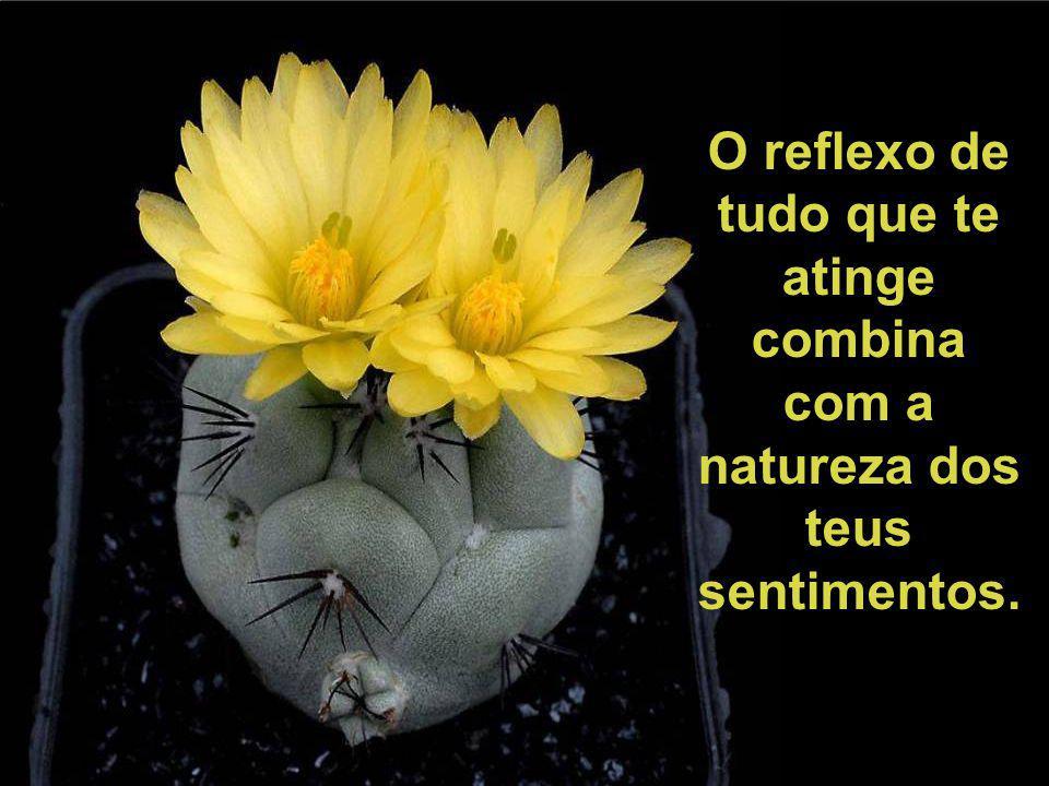O reflexo de tudo que te atinge combina com a natureza dos teus sentimentos.
