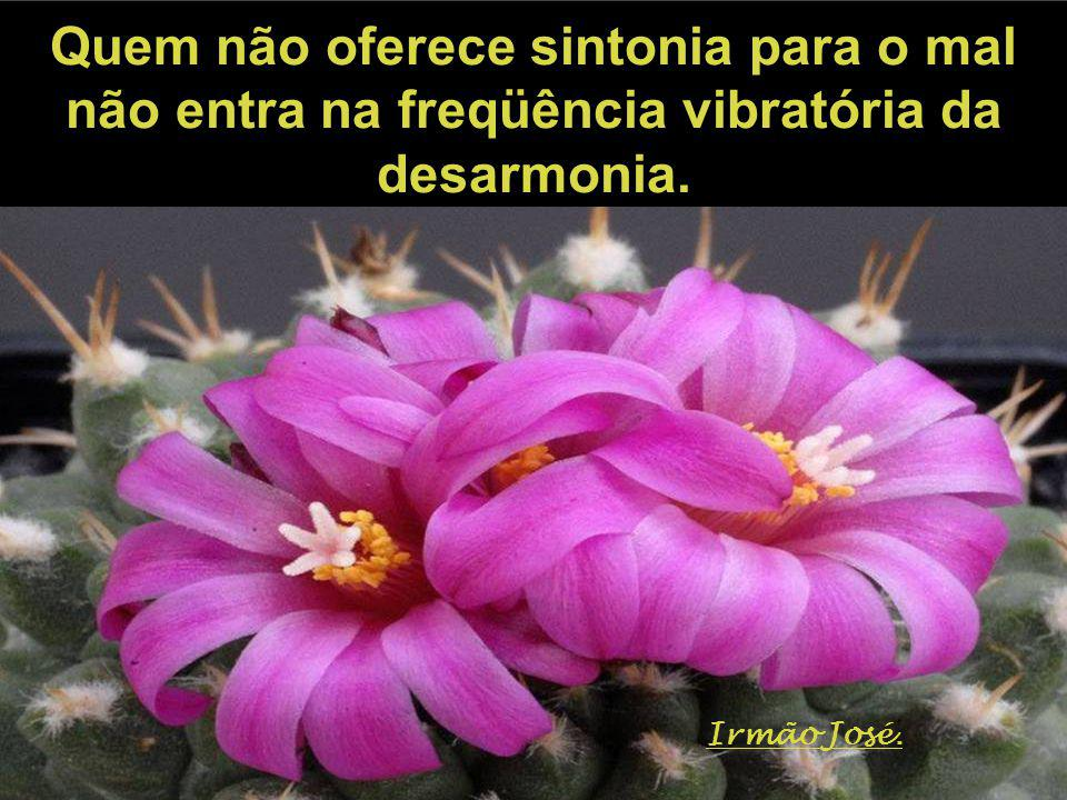 Quem não oferece sintonia para o mal não entra na freqüência vibratória da desarmonia.
