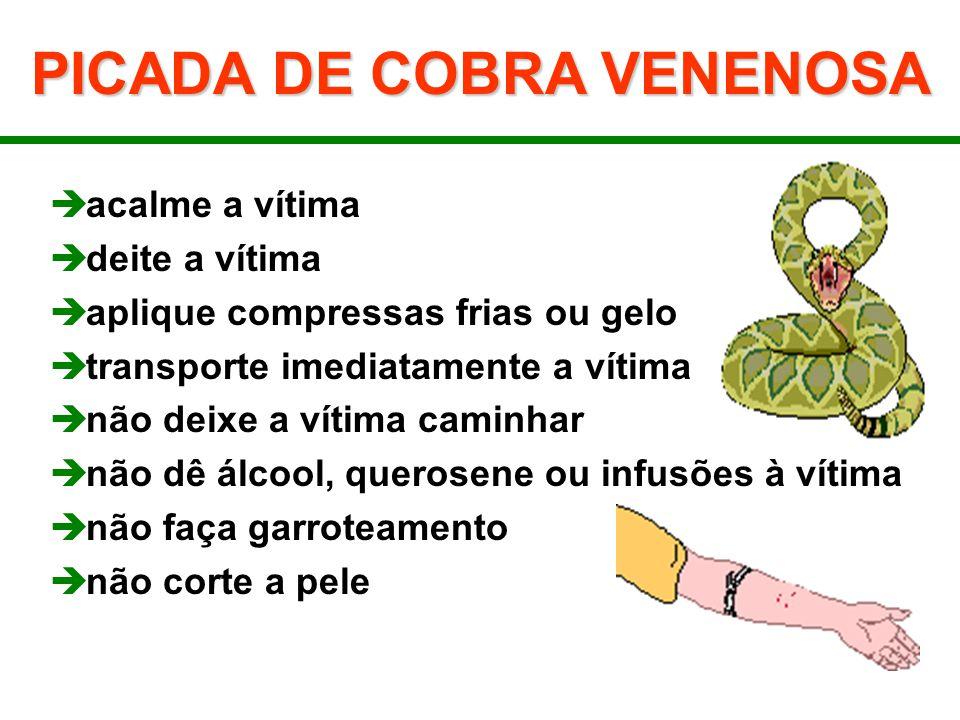 PICADA DE COBRA VENENOSA