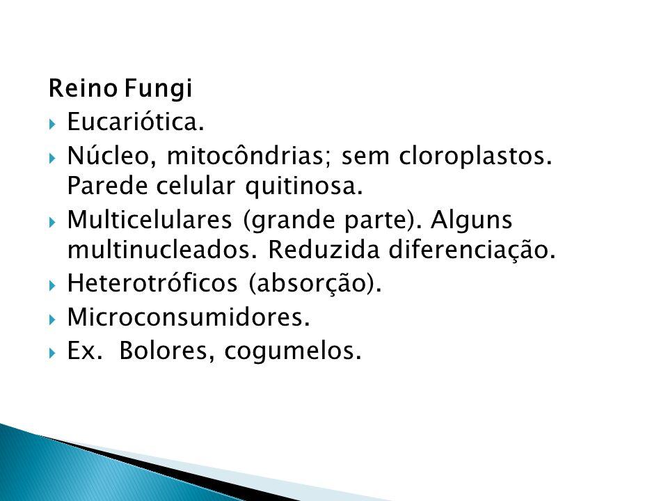Reino Fungi Eucariótica. Núcleo, mitocôndrias; sem cloroplastos. Parede celular quitinosa.