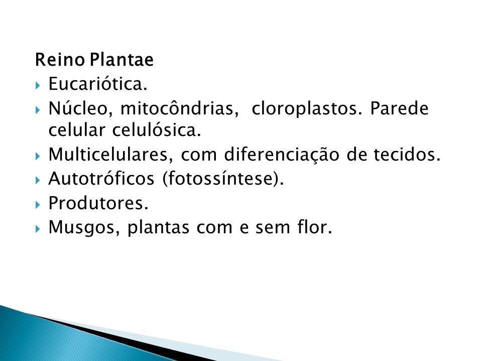 Reino Plantae Eucariótica. Núcleo, mitocôndrias, cloroplastos. Parede celular celulósica. Multicelulares, com diferenciação de tecidos.