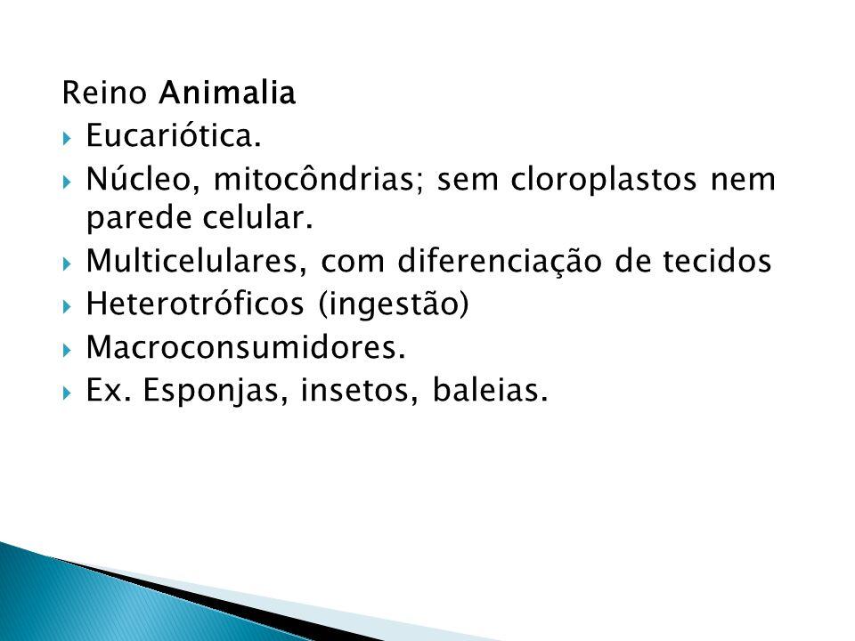 Reino Animalia Eucariótica. Núcleo, mitocôndrias; sem cloroplastos nem parede celular. Multicelulares, com diferenciação de tecidos.
