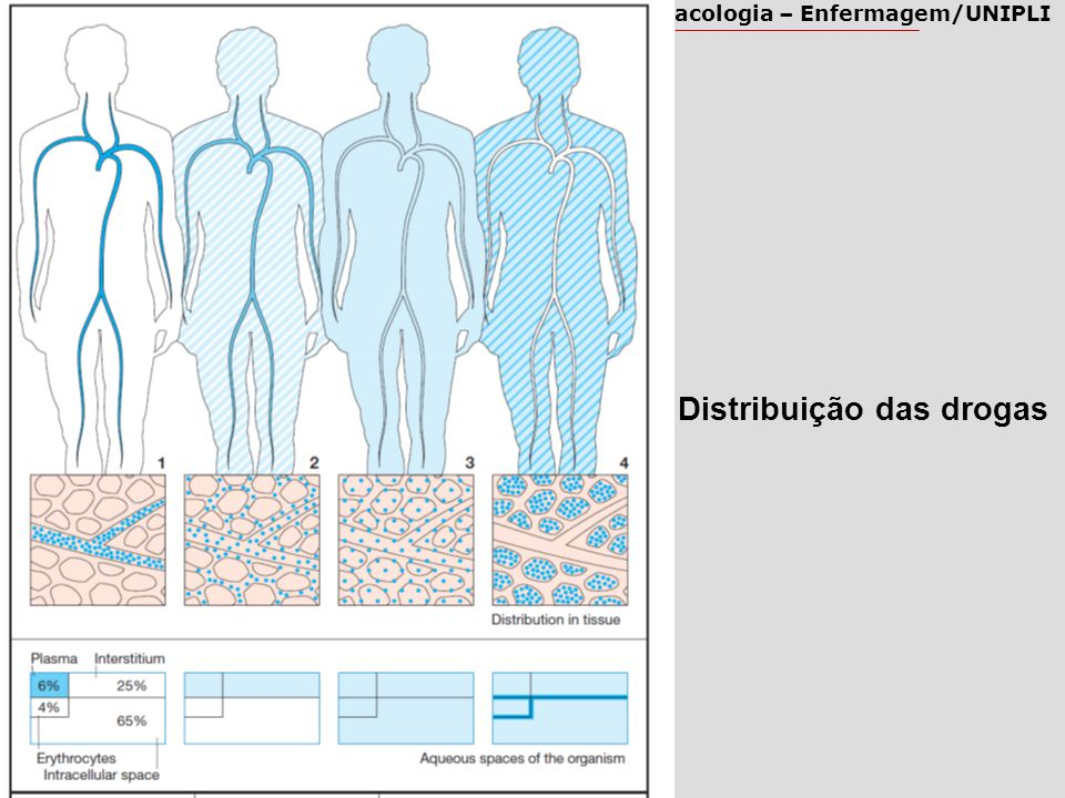Distribuição das drogas