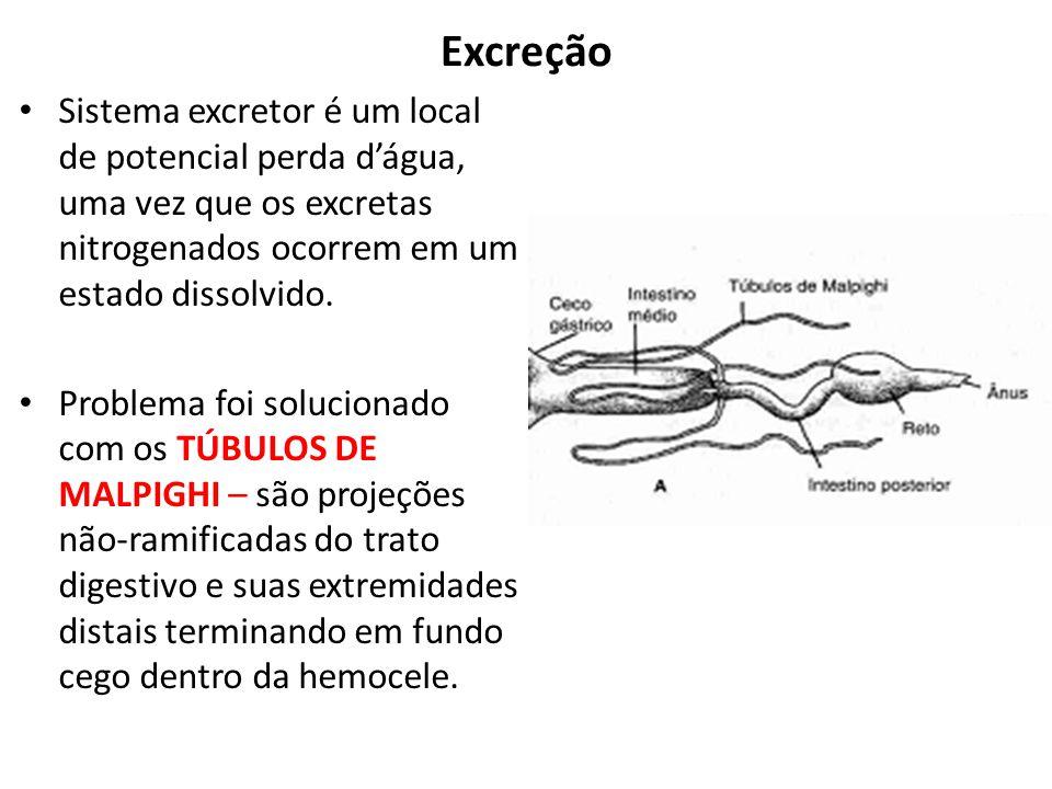 Excreção Sistema excretor é um local de potencial perda d'água, uma vez que os excretas nitrogenados ocorrem em um estado dissolvido.
