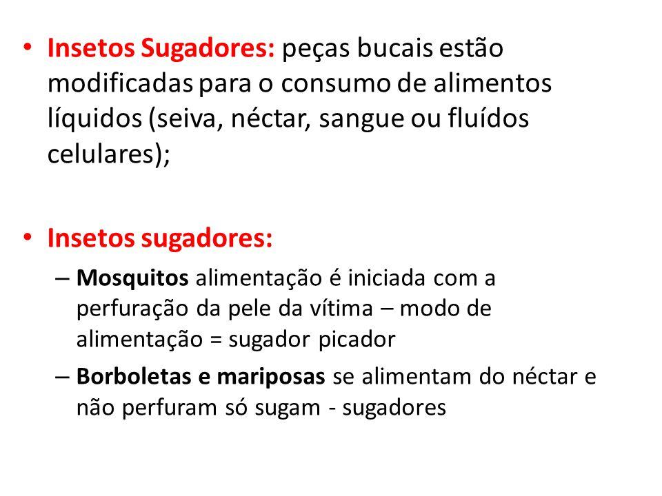 Insetos Sugadores: peças bucais estão modificadas para o consumo de alimentos líquidos (seiva, néctar, sangue ou fluídos celulares);