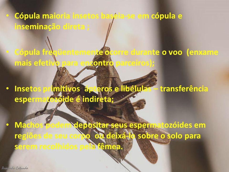 Cópula maioria insetos baseia-se em cópula e inseminação direta ;