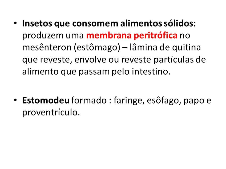 Insetos que consomem alimentos sólidos: produzem uma membrana peritrófica no mesênteron (estômago) – lâmina de quitina que reveste, envolve ou reveste partículas de alimento que passam pelo intestino.