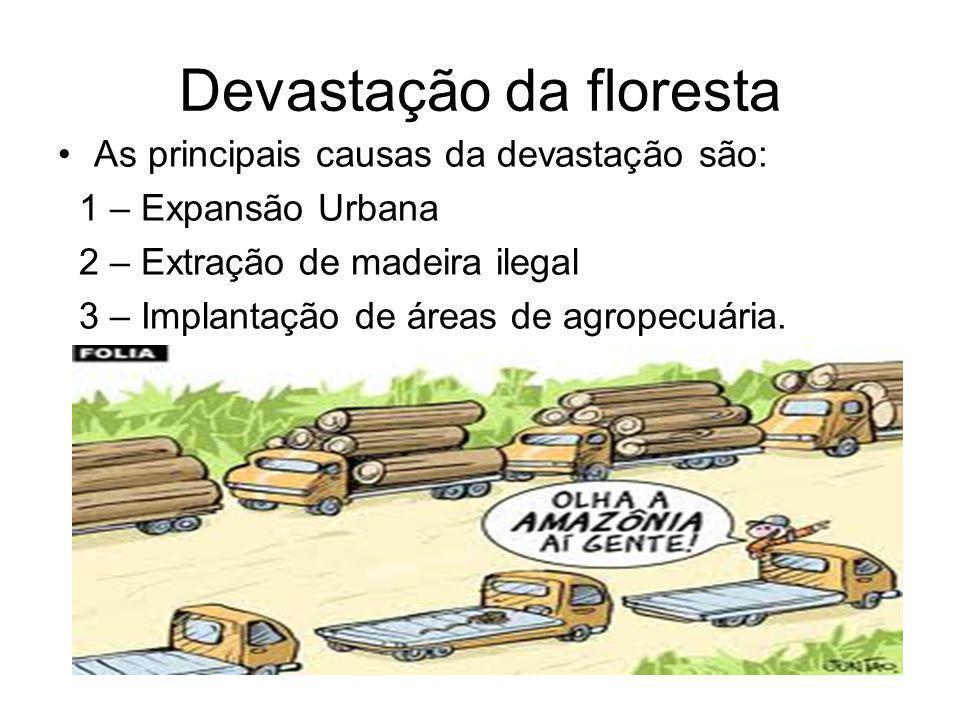 Devastação da floresta