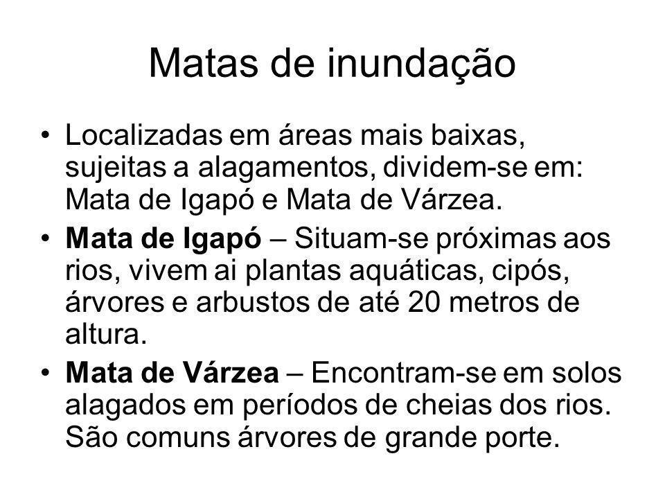 Matas de inundação Localizadas em áreas mais baixas, sujeitas a alagamentos, dividem-se em: Mata de Igapó e Mata de Várzea.