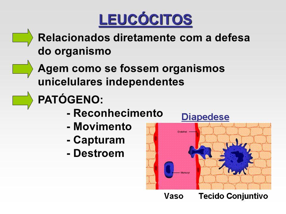 LEUCÓCITOS Relacionados diretamente com a defesa do organismo