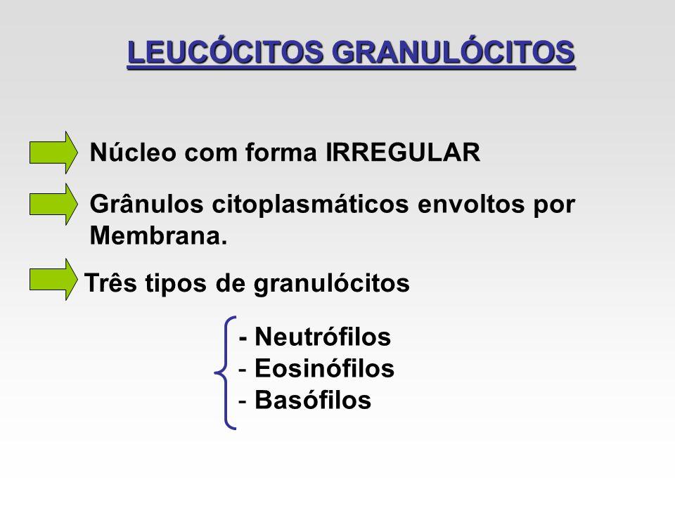 LEUCÓCITOS GRANULÓCITOS