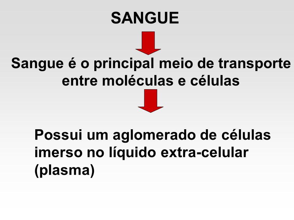 Sangue é o principal meio de transporte entre moléculas e células