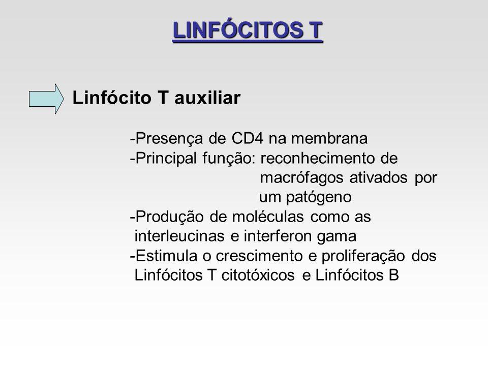 LINFÓCITOS T Linfócito T auxiliar Presença de CD4 na membrana