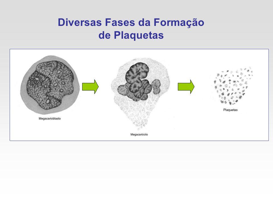 Diversas Fases da Formação