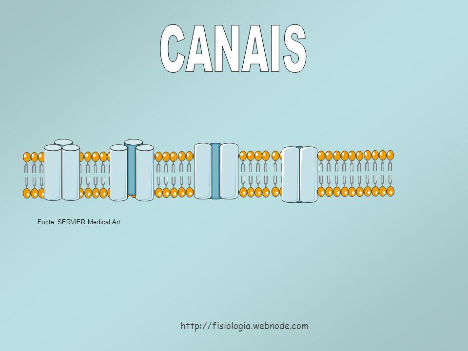 CANAIS Fonte: SERVIER Medical Art http://fisiologia.webnode.com