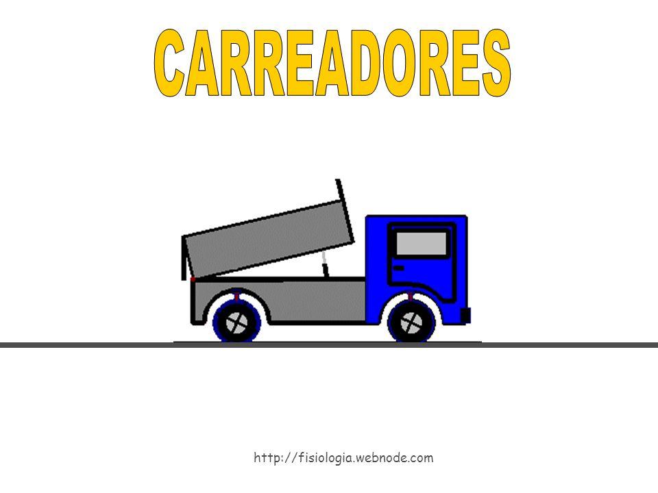 CARREADORES http://fisiologia.webnode.com