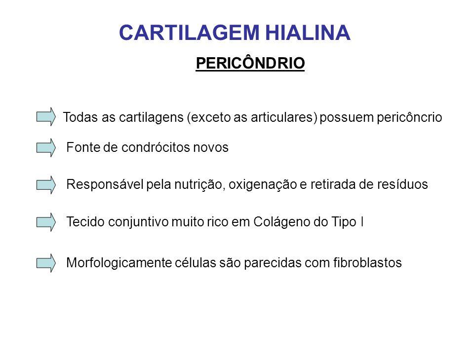 CARTILAGEM HIALINA PERICÔNDRIO