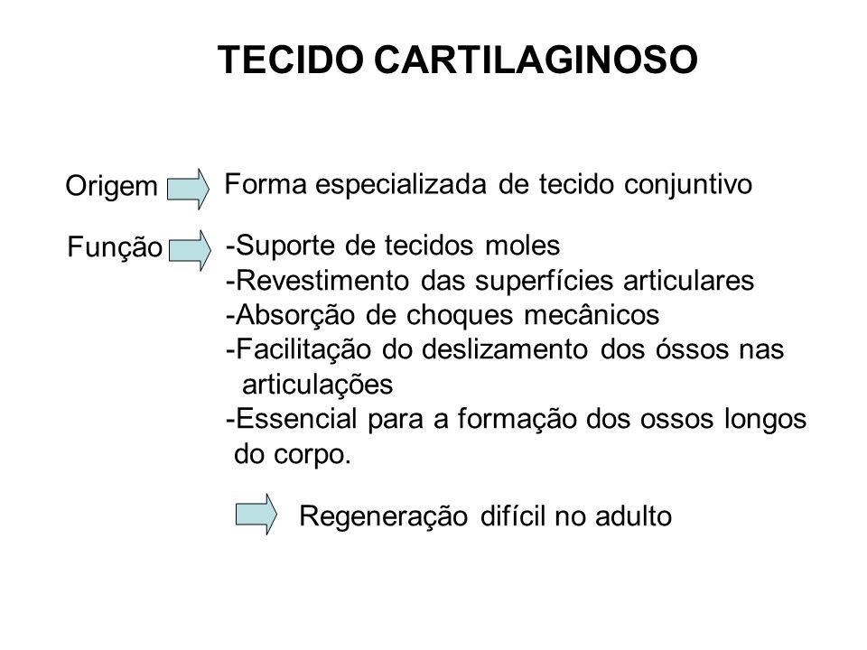TECIDO CARTILAGINOSO Origem Forma especializada de tecido conjuntivo