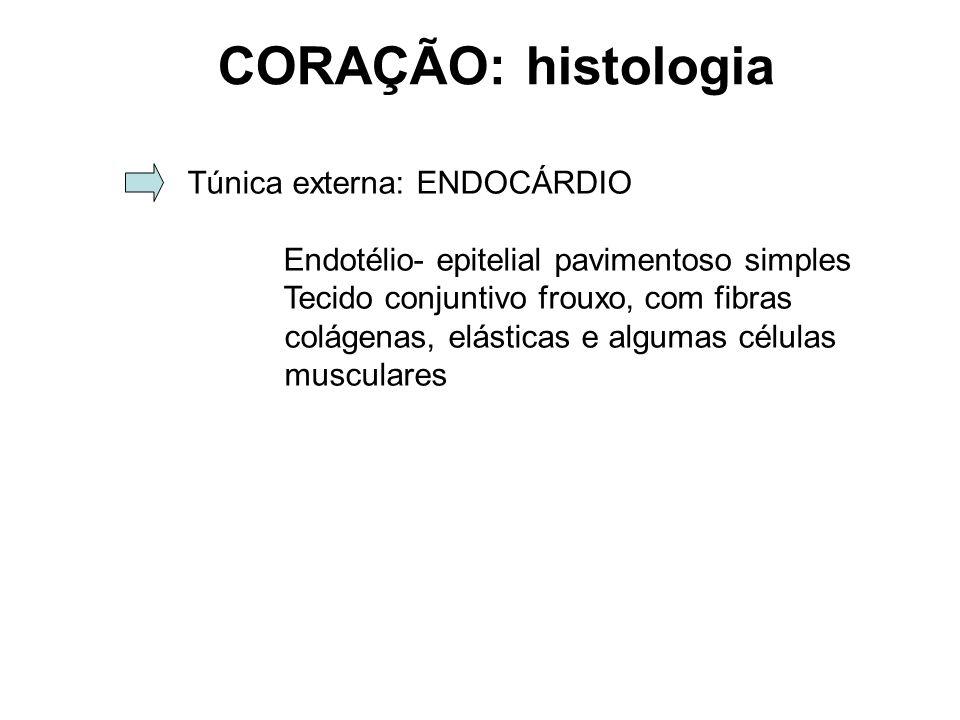CORAÇÃO: histologia Túnica externa: ENDOCÁRDIO