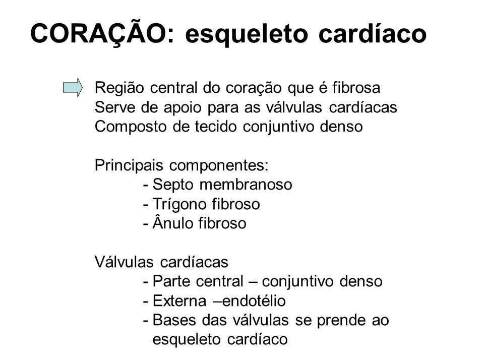 CORAÇÃO: esqueleto cardíaco