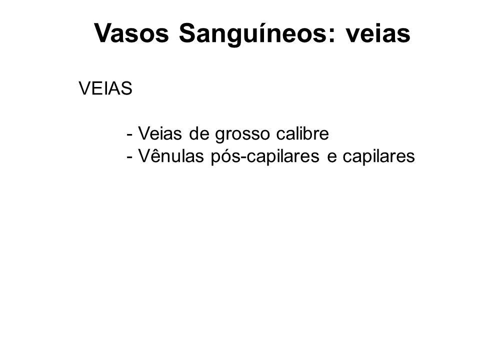 Vasos Sanguíneos: veias
