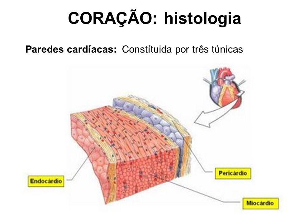 CORAÇÃO: histologia Paredes cardíacas: Constítuida por três túnicas