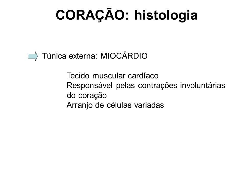 CORAÇÃO: histologia Túnica externa: MIOCÁRDIO Tecido muscular cardíaco