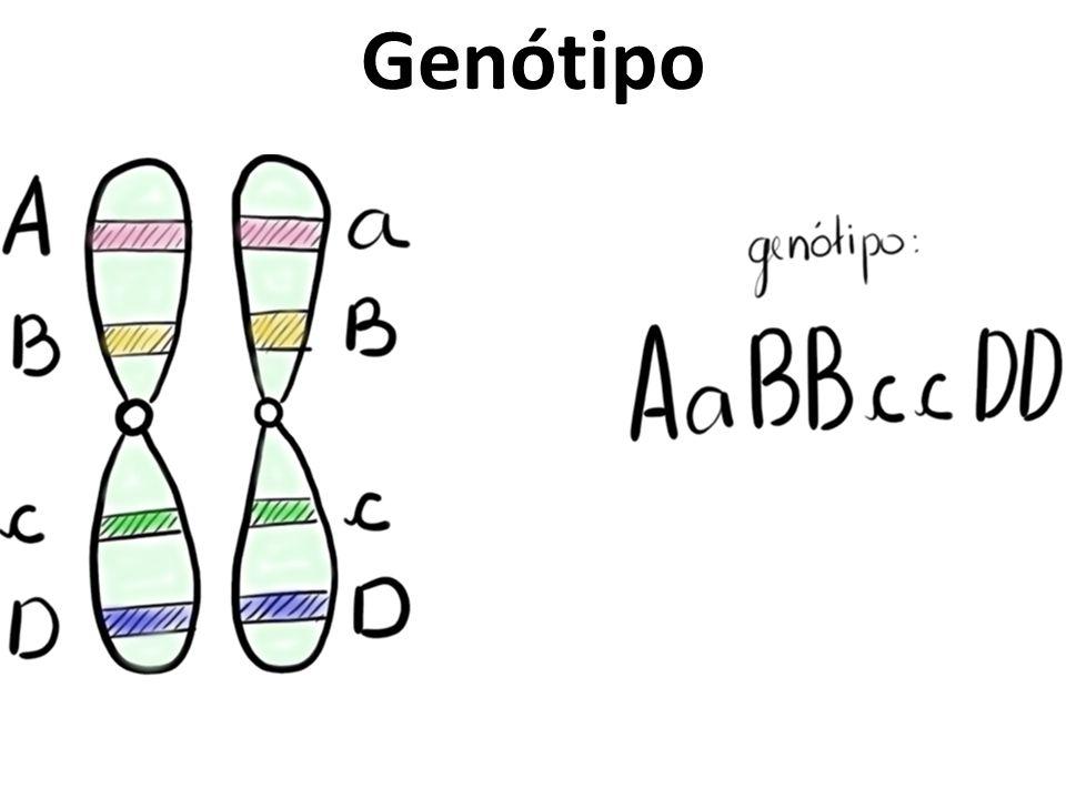 Genótipo