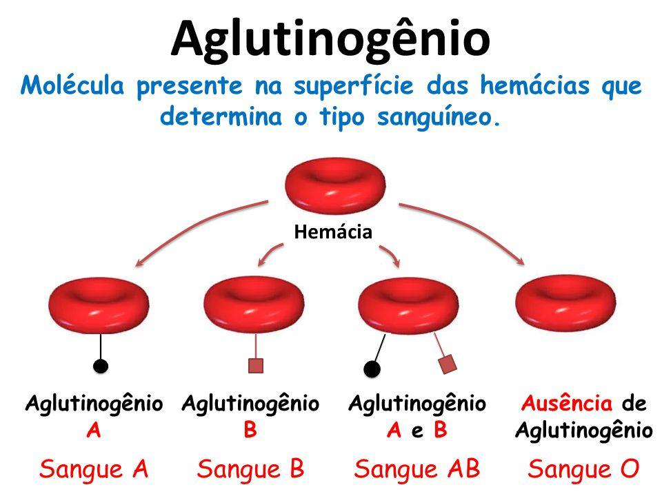 Aglutinogênio Molécula presente na superfície das hemácias que determina o tipo sanguíneo. Hemácia.
