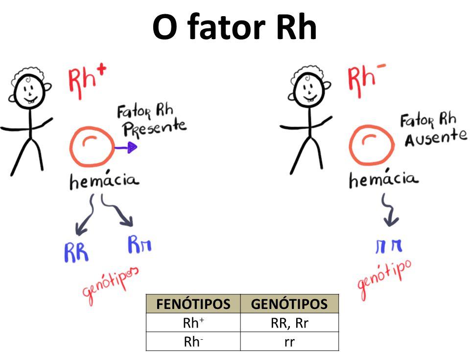 O fator Rh Fenótipos Genótipos Rh+ RR, Rr Rh- rr