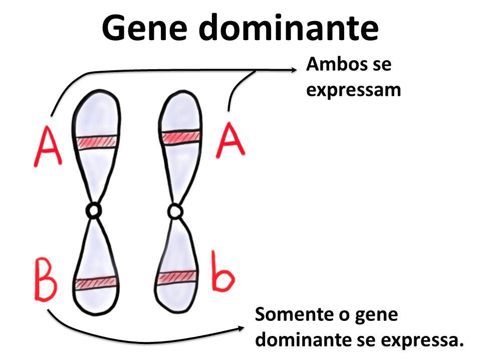 Gene dominante Ambos se expressam