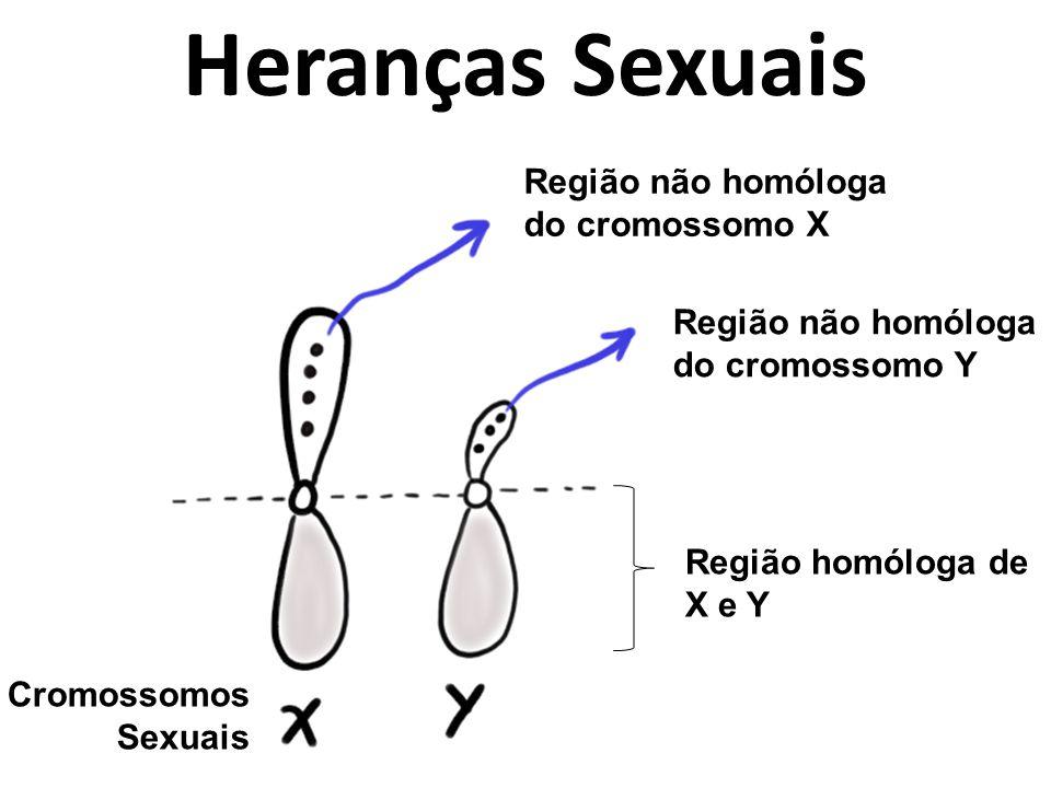 Heranças Sexuais Região não homóloga do cromossomo X