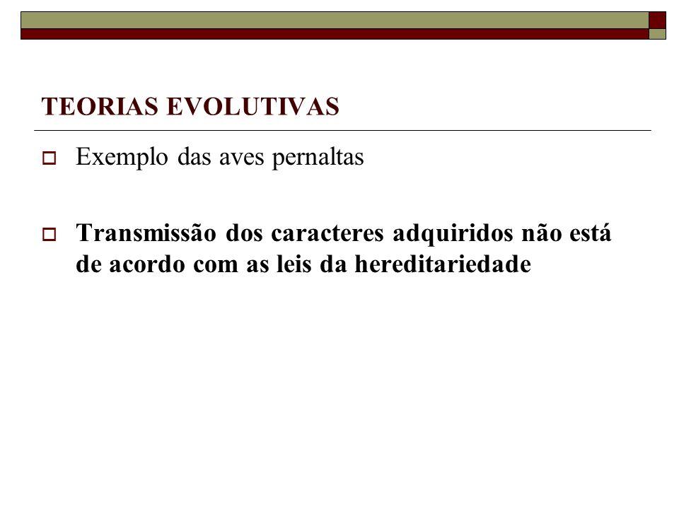 TEORIAS EVOLUTIVAS Exemplo das aves pernaltas.