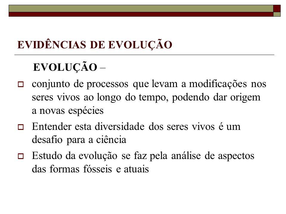EVIDÊNCIAS DE EVOLUÇÃO