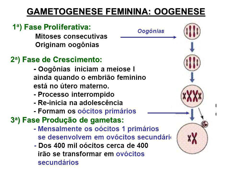 GAMETOGENESE FEMININA: OOGENESE