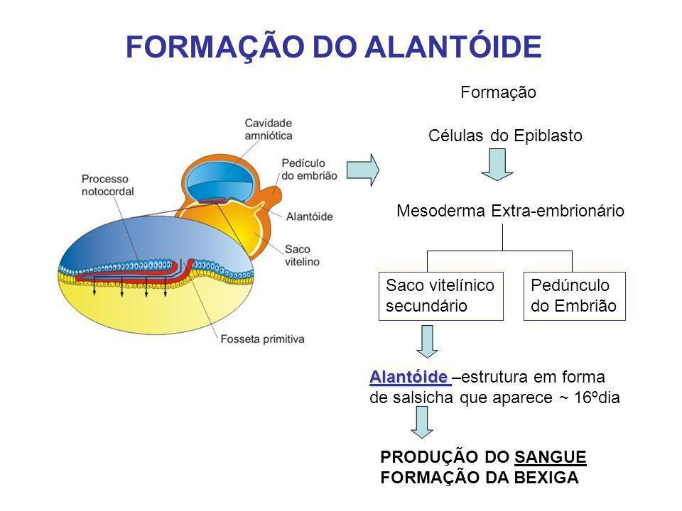 FORMAÇÃO DO ALANTÓIDE Formação Células do Epiblasto