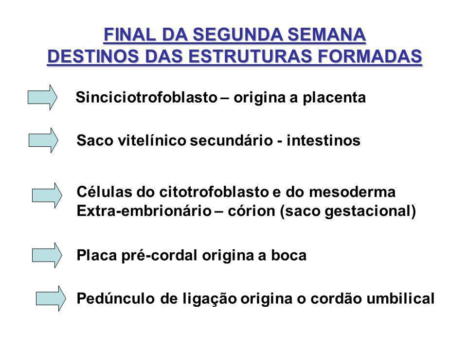 FINAL DA SEGUNDA SEMANA DESTINOS DAS ESTRUTURAS FORMADAS