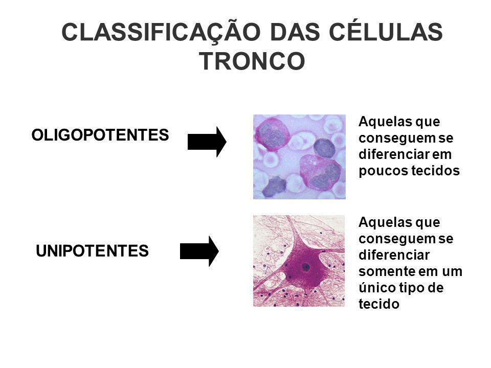 CLASSIFICAÇÃO DAS CÉLULAS TRONCO