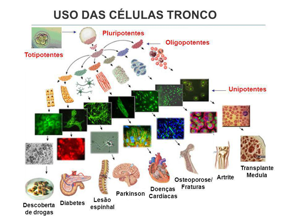 USO DAS CÉLULAS TRONCO Pluripotentes Oligopotentes Totipotentes