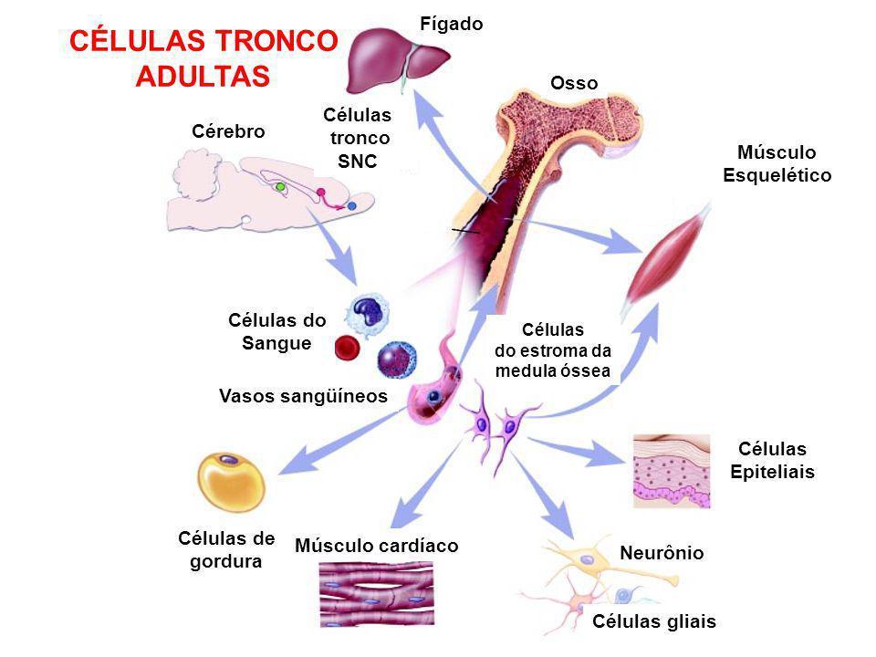 CÉLULAS TRONCO ADULTAS