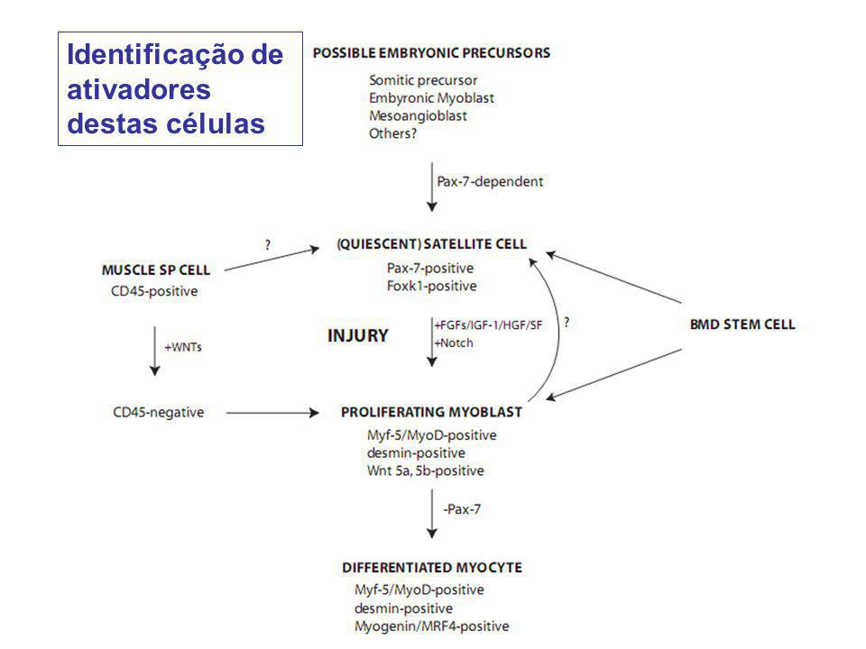 Identificação de ativadores destas células