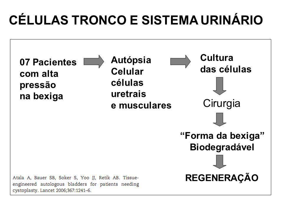CÉLULAS TRONCO E SISTEMA URINÁRIO