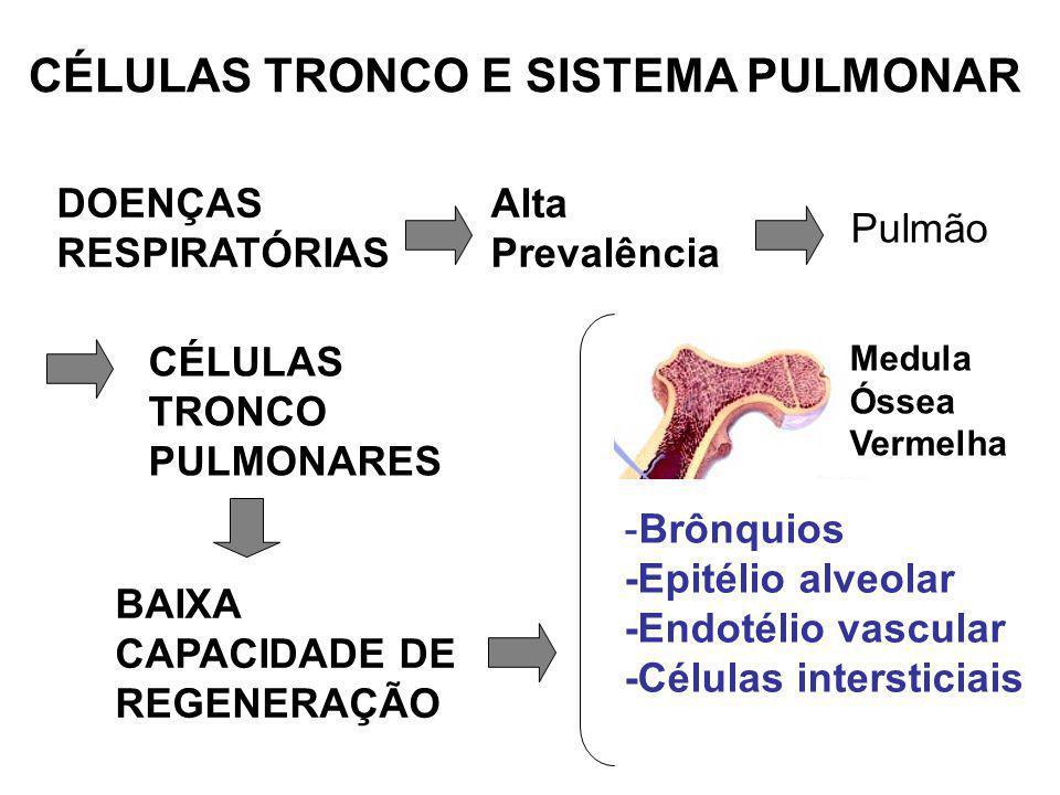 CÉLULAS TRONCO E SISTEMA PULMONAR