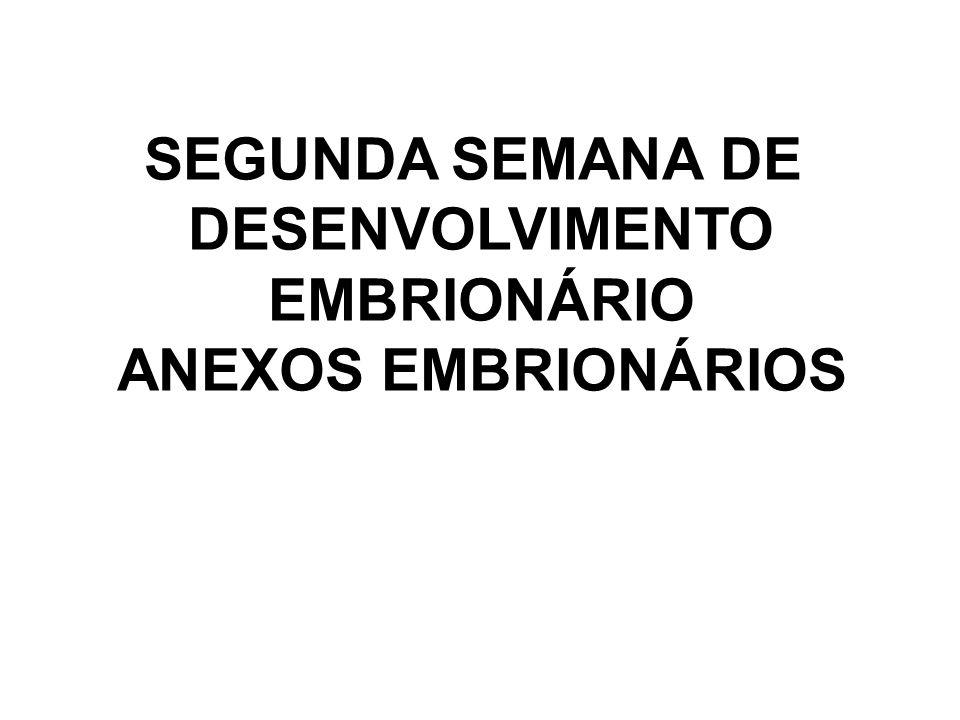 SEGUNDA SEMANA DE DESENVOLVIMENTO EMBRIONÁRIO ANEXOS EMBRIONÁRIOS