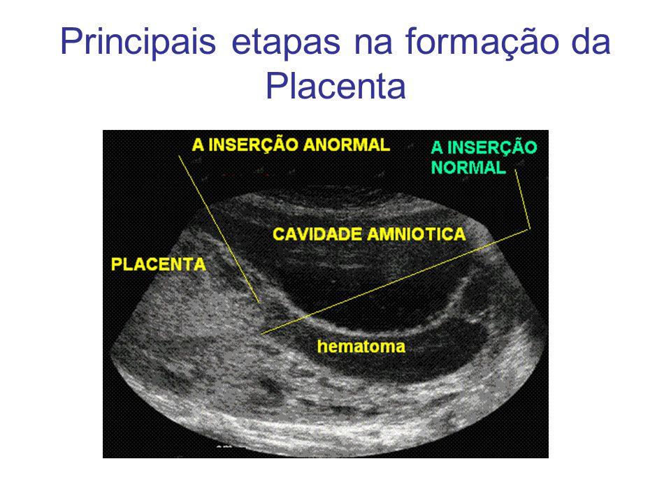 Principais etapas na formação da Placenta