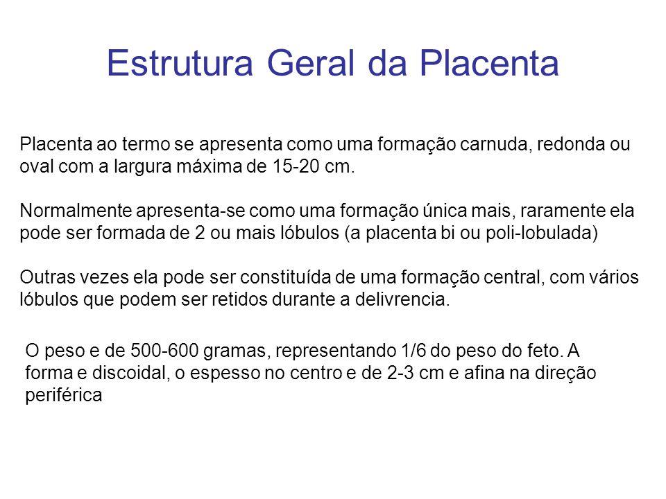 Estrutura Geral da Placenta