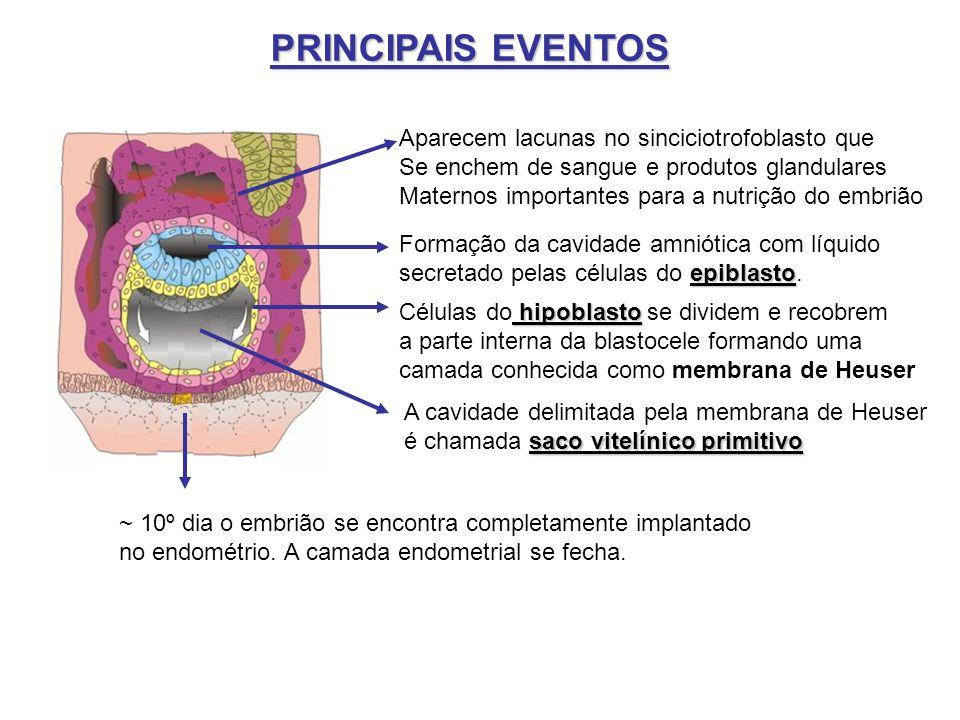 PRINCIPAIS EVENTOS Aparecem lacunas no sinciciotrofoblasto que
